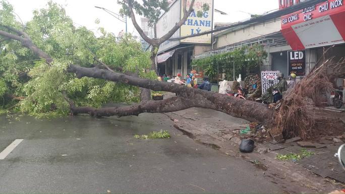 Lốc xoáy nhiều nơi ở Sài Gòn, cây xanh ngã rạp, 3 người trọng thương - Ảnh 13.