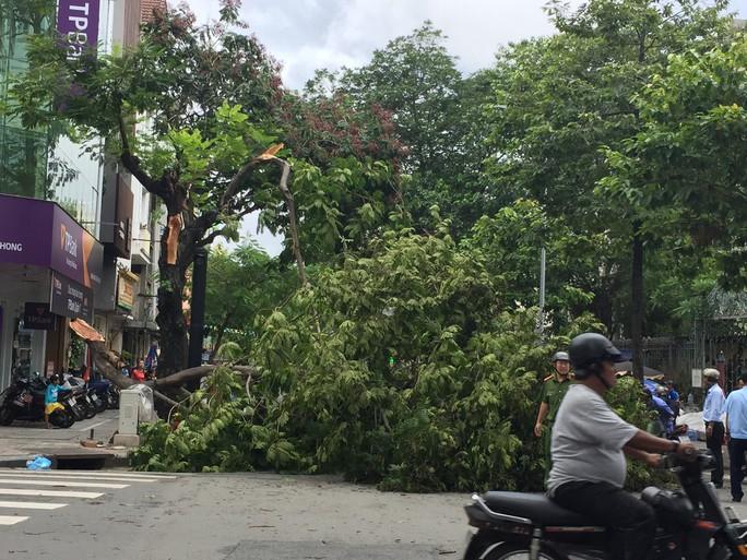 Lốc xoáy nhiều nơi ở Sài Gòn, cây xanh ngã rạp, 3 người trọng thương - Ảnh 17.