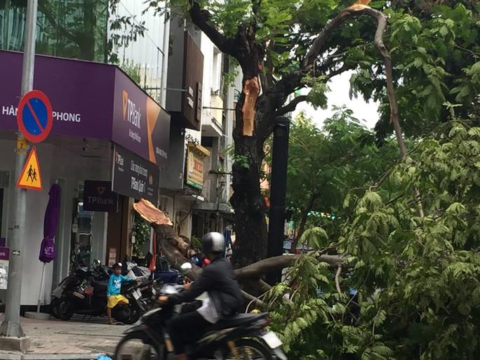Lốc xoáy nhiều nơi ở Sài Gòn, cây xanh ngã rạp, 3 người trọng thương - Ảnh 16.