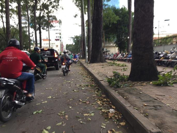 Lốc xoáy nhiều nơi ở Sài Gòn, cây xanh ngã rạp, 3 người trọng thương - Ảnh 18.