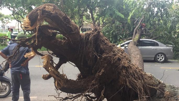 Lốc xoáy nhiều nơi ở Sài Gòn, cây xanh ngã rạp, 3 người trọng thương - Ảnh 7.