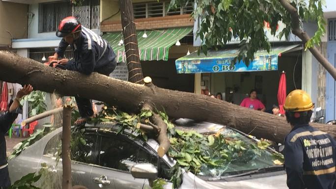 Lốc xoáy nhiều nơi ở Sài Gòn, cây xanh ngã rạp, 3 người trọng thương - Ảnh 8.