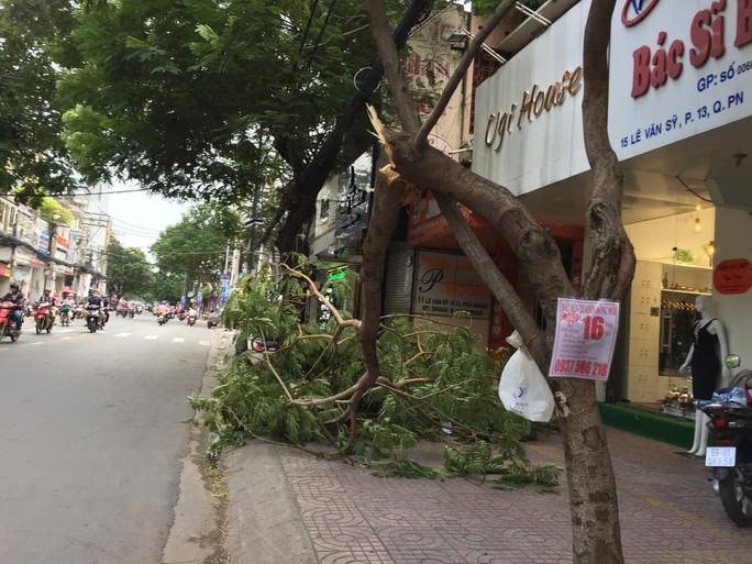 Lốc xoáy nhiều nơi ở Sài Gòn, cây xanh ngã rạp, 3 người trọng thương - Ảnh 19.