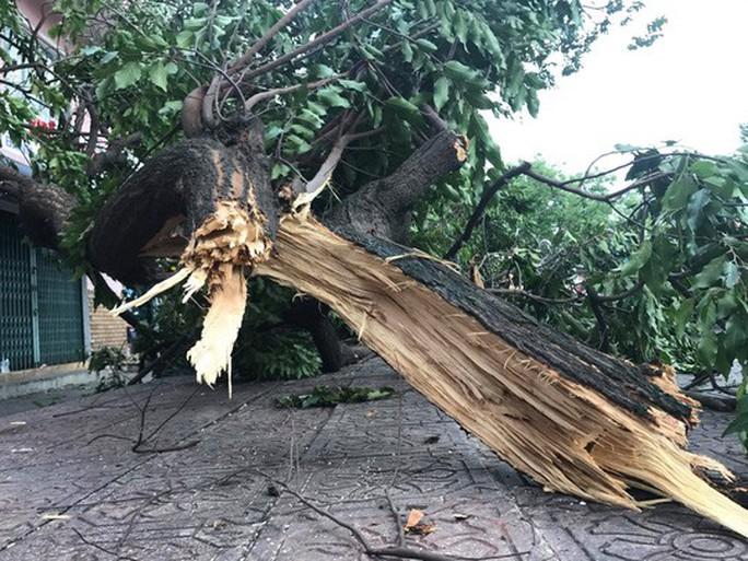 Lốc xoáy nhiều nơi ở Sài Gòn, cây xanh ngã rạp, 3 người trọng thương - Ảnh 3.