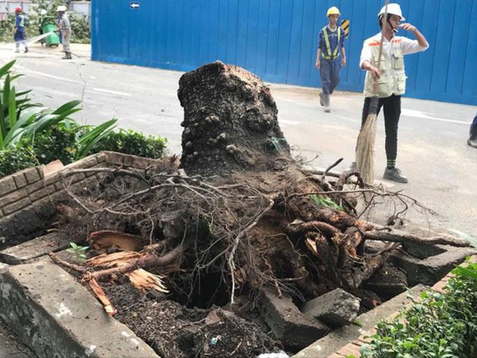 Lốc xoáy nhiều nơi ở Sài Gòn, cây xanh ngã rạp, 3 người trọng thương - Ảnh 4.