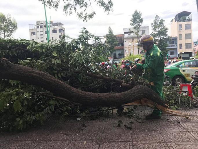 Lốc xoáy nhiều nơi ở Sài Gòn, cây xanh ngã rạp, 3 người trọng thương - Ảnh 5.