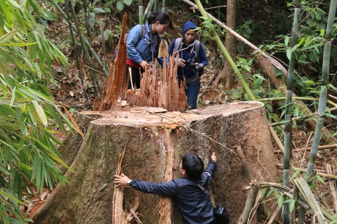 Vụ thảm sát rừng lim cổ thụ: Truy nã 2 đối tượng chủ mưu - Ảnh 1.