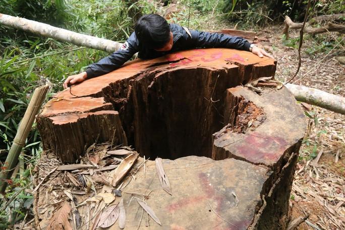 Vụ thảm sát rừng lim cổ thụ: Truy nã 2 đối tượng chủ mưu - Ảnh 2.