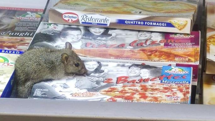 Bọ cạp xâm chiếm đô thị Brazil, chuột tấn công Hồng Kông - Ảnh 2.