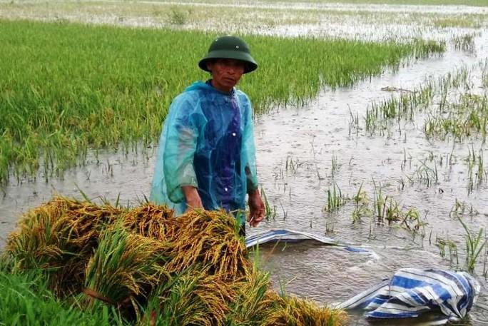 Hơn 2.000 thanh niên giúp dân di dời đồ đạc tránh bão Sơn Tinh - Ảnh 5.