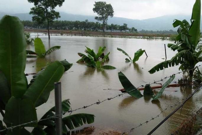 Hơn 2.000 thanh niên giúp dân di dời đồ đạc tránh bão Sơn Tinh - Ảnh 3.