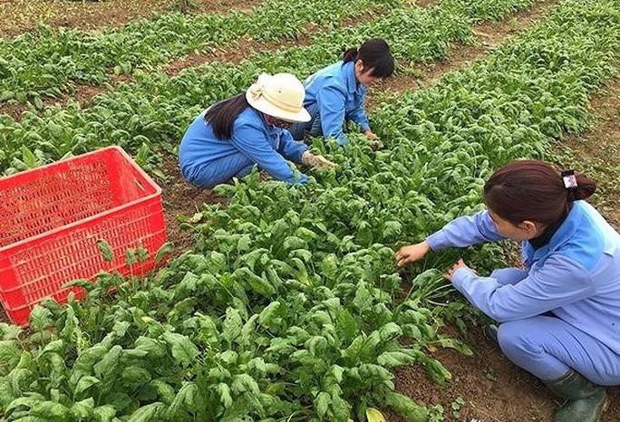 Nhật Bản sẵn sàng tiếp nhận thực tập sinh nông nghiệp Việt Nam - Ảnh 1.
