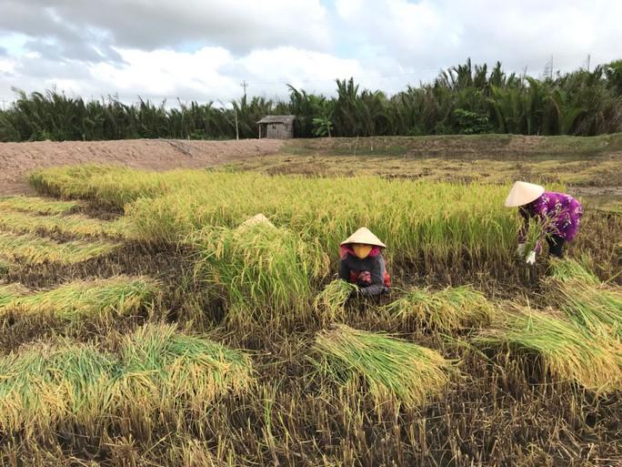 Công ty nông sản hữu cơ vốn 0 đồng kêu gọi thành công 10 tỉ đồng: Chúng tôi cần người đồng hành - Ảnh 1.