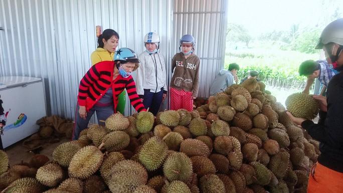 Lại ùn ùn kéo về Vĩnh Long ăn sầu riêng 19.000 đồng/kg - Ảnh 1.