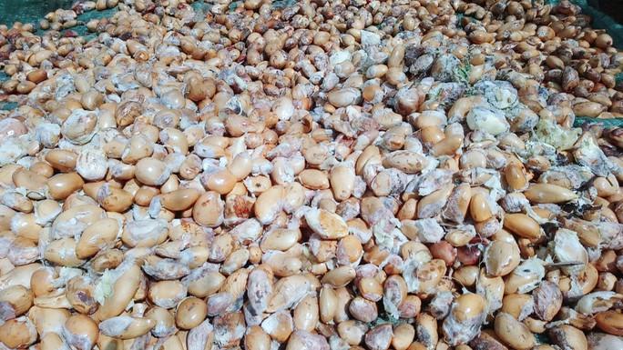 Lại ùn ùn kéo về Vĩnh Long ăn sầu riêng 19.000 đồng/kg - Ảnh 7.