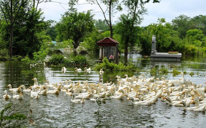 Hà Nội: Cuộc sống đảo lộn nơi người dân phải chèo thuyền trên đường - Ảnh 9.