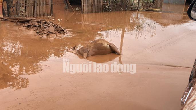 THẢM HOẠ VỠ ĐẬP THUỶ ĐIỆN: Động vật chết khắp nơi, trẻ em lội bùn nhận cứu trợ - Ảnh 5.