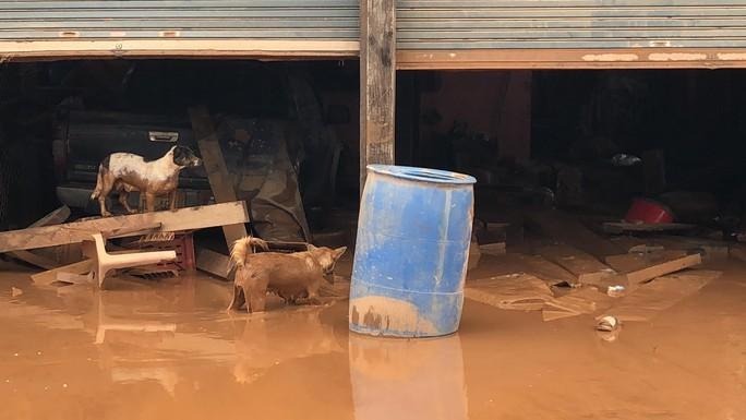 THẢM HOẠ VỠ ĐẬP THUỶ ĐIỆN: Động vật chết khắp nơi, trẻ em lội bùn nhận cứu trợ - Ảnh 6.