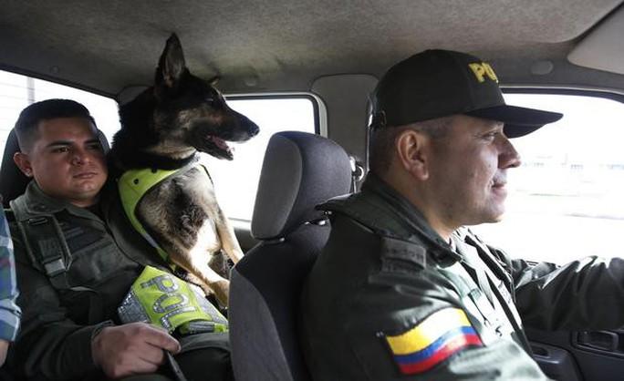 Băng đảng ma túy treo thưởng 70.000 USD giết chó nghiệp vụ - Ảnh 1.