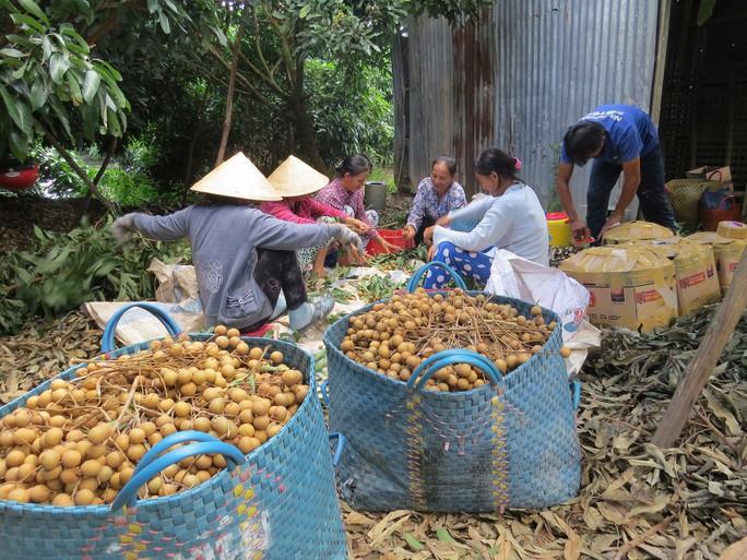 Đồng Tháp đẩy mạnh mô hình hội quán nông dân - Ảnh 1.