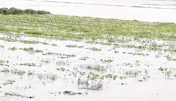 Miền Tây bắt đầu chống chọi với nước lũ từ sự cố vỡ đập ở Lào - Ảnh 3.