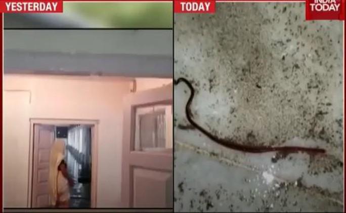 Ấn Độ: Mưa lớn gây ngập nặng, cá bơi vào bệnh viện - Ảnh 3.