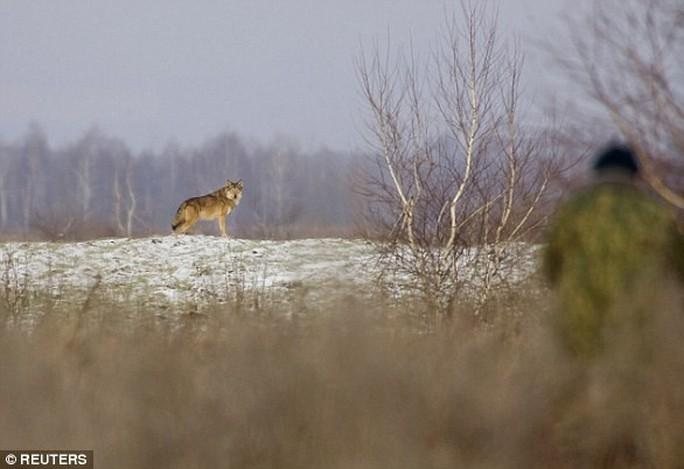 """Châu Âu trước nguy cơ """"sói phóng xạ"""" - Ảnh 1."""