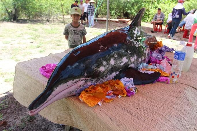 Ngư dân Quảng Nam bất lực nhìn cá voi 2 tạ trôi vào bờ - Ảnh 1.