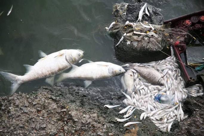 Cá chết ở hồ Tây: Có thể do biến đổi khí hậu - Ảnh 1.