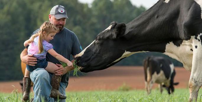 Sữa organic thực thụ gặp khó ở Mỹ - Ảnh 1.