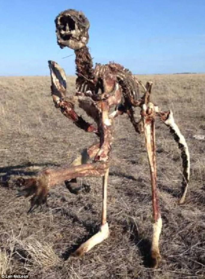 Úc: Hạn hán nặng, chuột túi chết trơ xương - Ảnh 1.