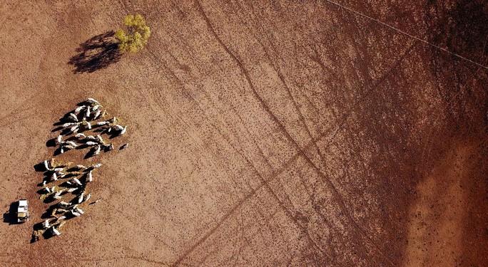 Úc: Hạn hán nặng, chuột túi chết trơ xương - Ảnh 5.
