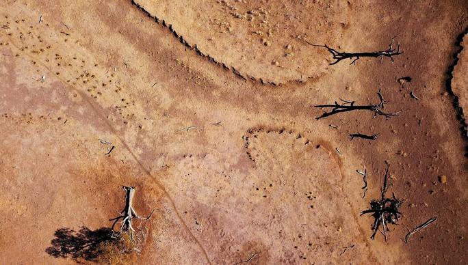 Úc: Hạn hán nặng, chuột túi chết trơ xương - Ảnh 4.