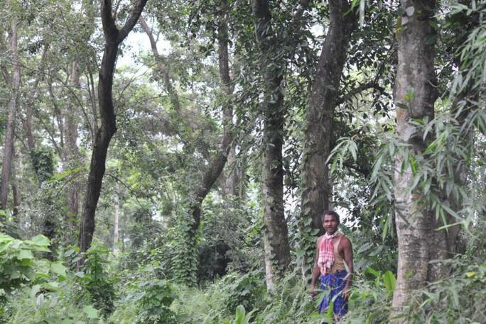 Người đàn ông một mình trồng rừng rộng 550 hectare trong 40 năm - Ảnh 2.