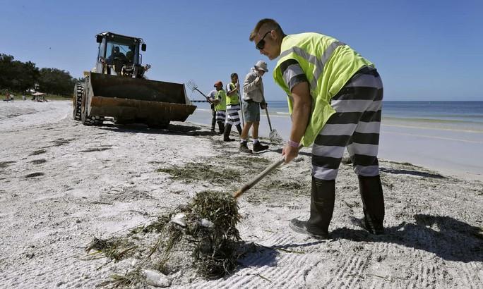 Mỹ: Thủy triều đỏ khiến 300 tấn cá phơi xác - Ảnh 5.