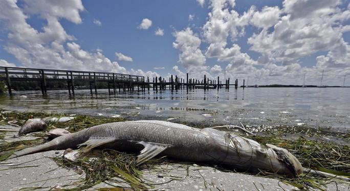 Mỹ: Thủy triều đỏ khiến 300 tấn cá phơi xác - Ảnh 4.