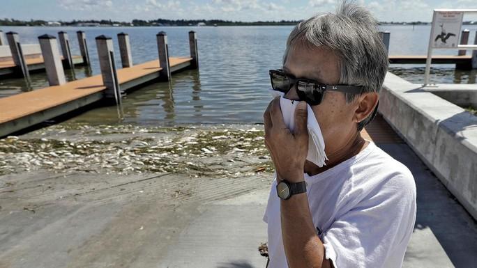 Mỹ: Thủy triều đỏ khiến 300 tấn cá phơi xác - Ảnh 2.