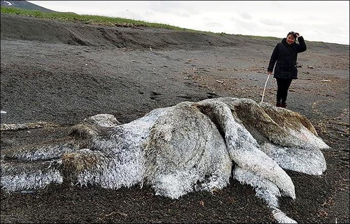 """""""Thủy quái"""" bí ẩn trôi dạt vào bờ biển Nga - Ảnh 1."""