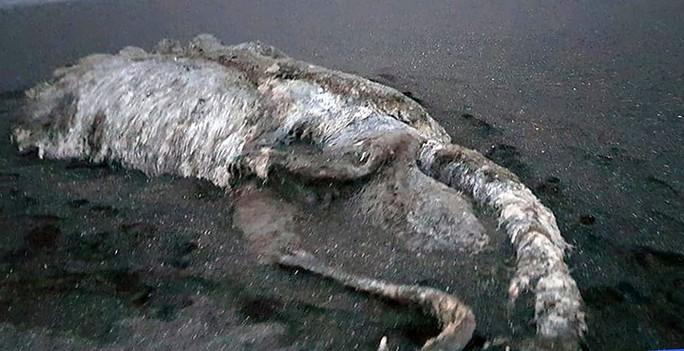 """""""Thủy quái"""" bí ẩn trôi dạt vào bờ biển Nga - Ảnh 4."""
