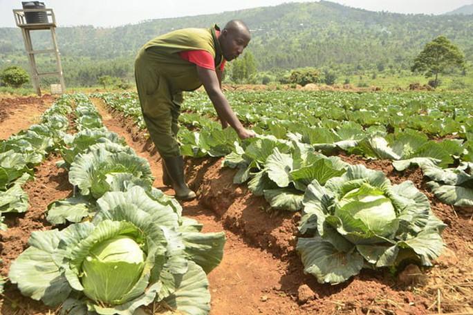 Nông nghiệp hữu cơ tạo việc làm lành mạnh - Ảnh 1.