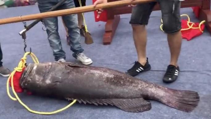 Trung Quốc: Xẻ thịt Vua cá lạ giá gần 1 tỉ để lấy hên - Ảnh 1.