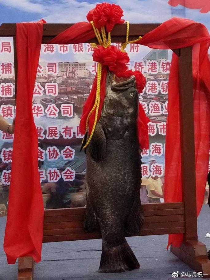 Trung Quốc: Xẻ thịt Vua cá lạ giá gần 1 tỉ để lấy hên - Ảnh 2.
