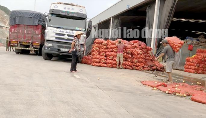 VIDEO điều tra: Đường đi nông sản Trung Quốc nhái Đà Lạt - Ảnh 2.