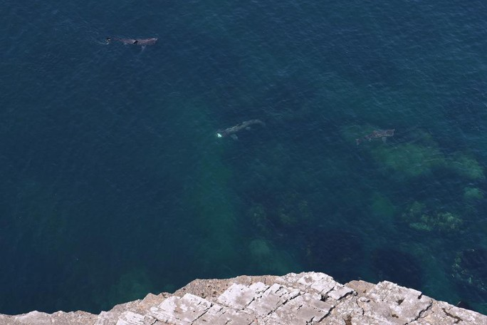 Vệ tinh bám đuôi cá nhám phơi nắng bí ẩn - Ảnh 2.