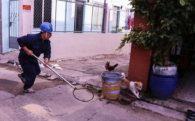 Bắt chó thả rông giữa trung tâm Sài Gòn - Ảnh 1.