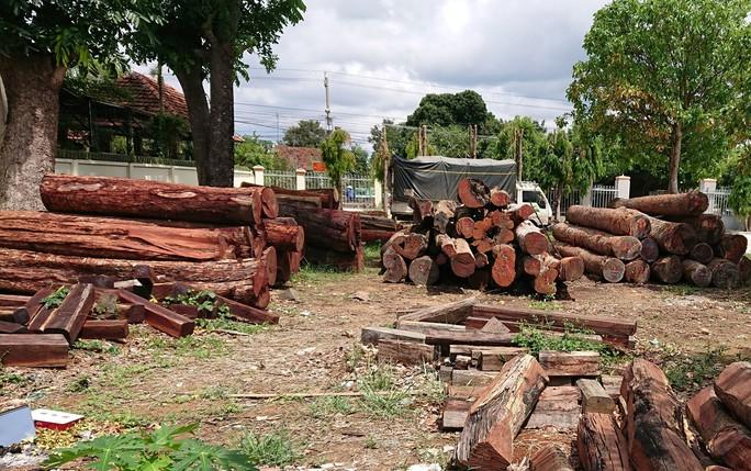 Lãnh đạo kiểm lâm tiếp tay trùm gỗ lậu - Ảnh 1.