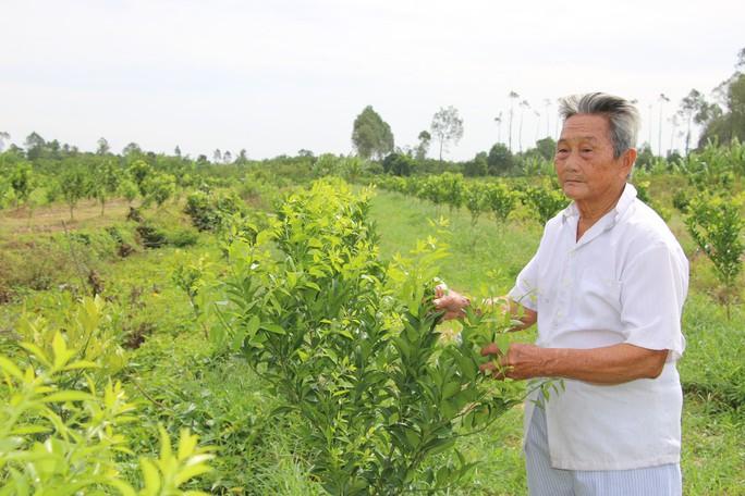 Nhà vườn trồng quýt hồng Lai Vung kêu cứu vì bị quỵt tiền - Ảnh 4.