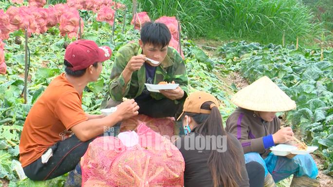 VIDEO: Nông sản Trung Quốc nhái Đà Lạt: Giết chết nông dân - Ảnh 4.