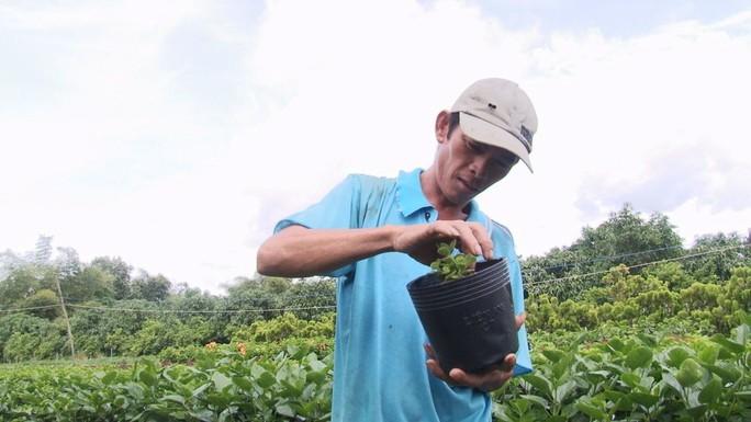 Nông dân Sa Đéc thuần hóa nhiều giống cây kiểng độc, lạ - Ảnh 1.