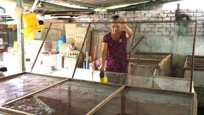 Cô giáo về hưu mỗi tháng cung cấp 500 kg dế ra thị trường - Ảnh 10.
